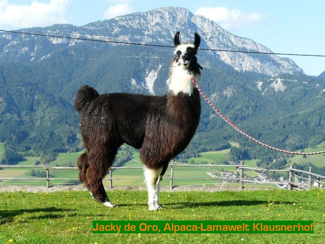 Klausnerhof-jacky-1000